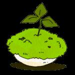 コケ(盆栽)
