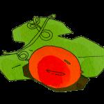 カラスウリ