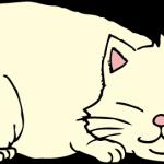 おデブ猫ちゃん