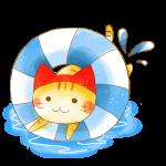 8月猫ちゃん