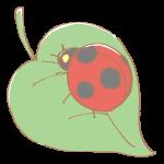 葉っぱの上のてんとう虫
