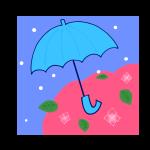 傘とアジサイ