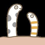 チンアナゴ