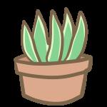 多肉植物(2)