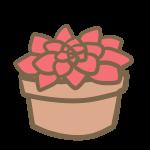 多肉植物(6)
