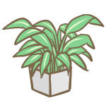 観葉植物(5)