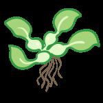 水草(2)
