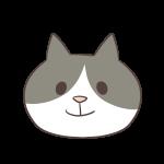 はちわれ猫