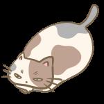 デブな三毛猫