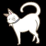 ツンとした白猫