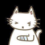けがをした猫