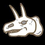 恐竜の頭蓋骨(2)