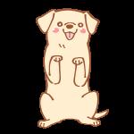 ちんちんをする犬