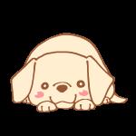 ふせをする犬