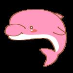 ピンク色のイルカ