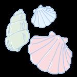 カラフルな貝殻