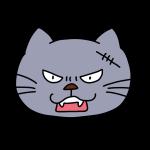 怒ってる猫